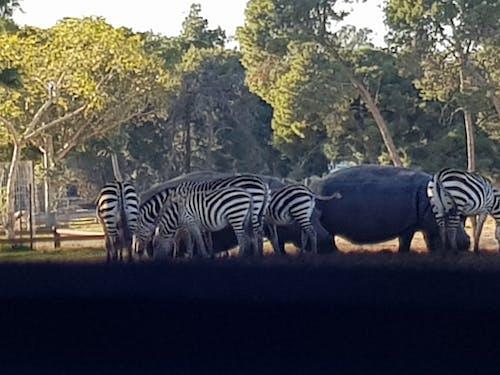 Gratis stockfoto met beest, safari, wilde beesten, wildleven