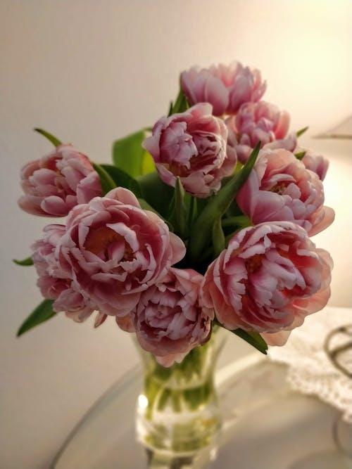 春天的花朵, 粉红色的郁金香, 花瓶, 鬱金香 的 免费素材照片