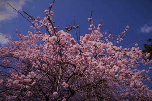 美麗的花 的 免費圖庫相片
