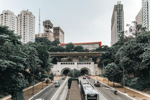 Immagine gratuita di alberi, architettura, auto, brasile