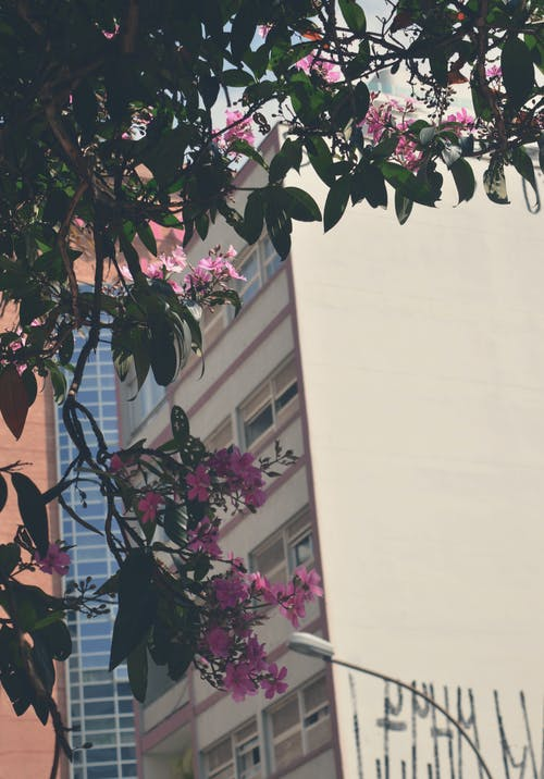 Foto profissional grátis de ao ar livre, arquitetura, árvore, aumento
