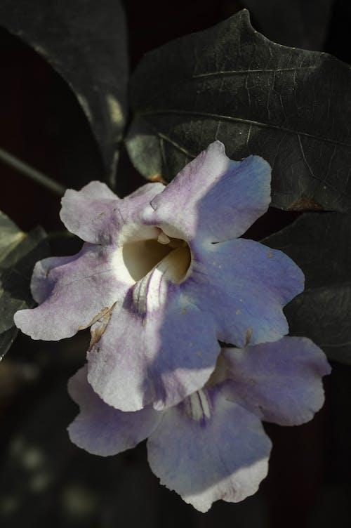 Gratis lagerfoto af blade, blomster, blomstrende, Botanisk