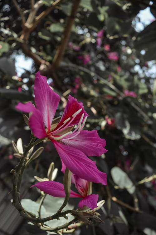 Close Up Photography of Pink Petaled Flowers