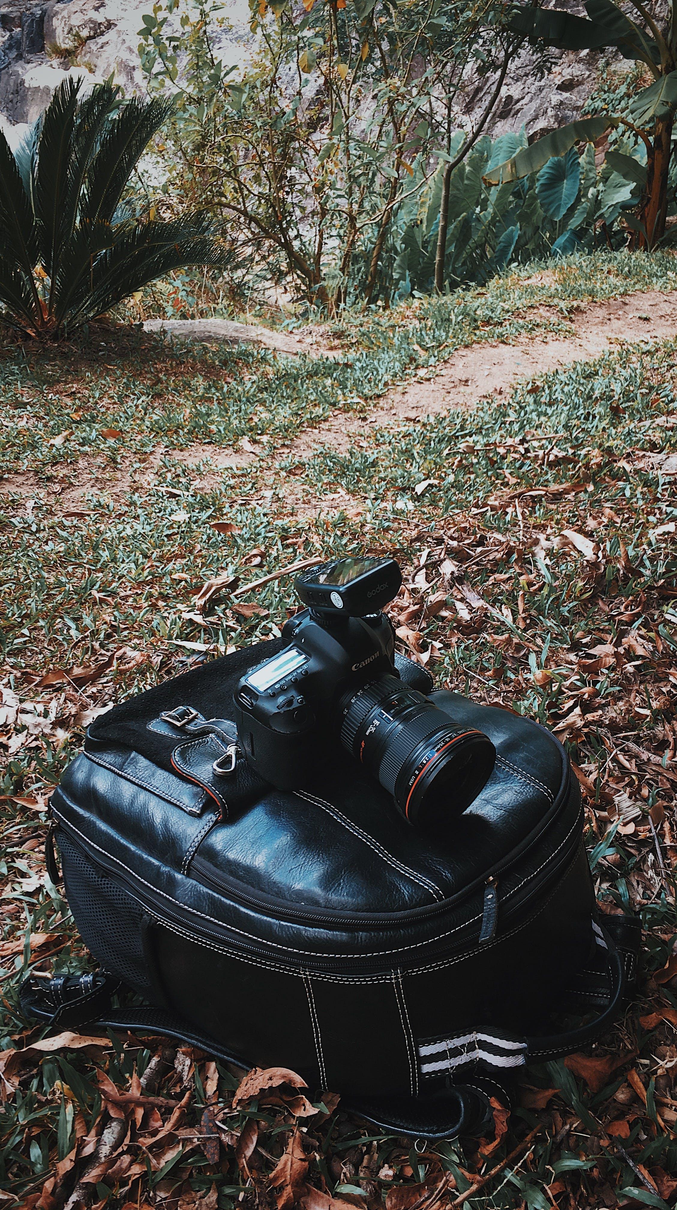 Foto stok gratis canon, hutan, iphone, kamera