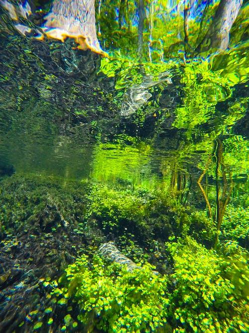 Darmowe zdjęcie z galerii z powyżej i poniżej, rośliny wodne