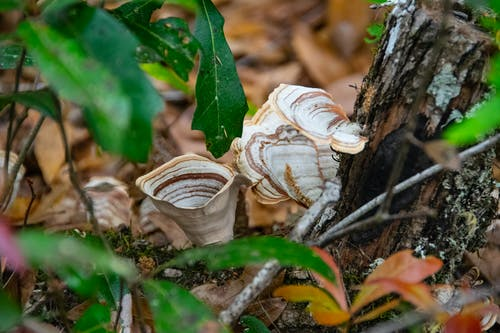 Ilmainen kuvapankkikuva tunnisteilla sienet