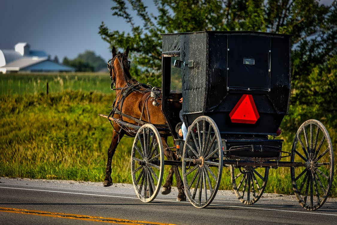 amish, buggy, carriage