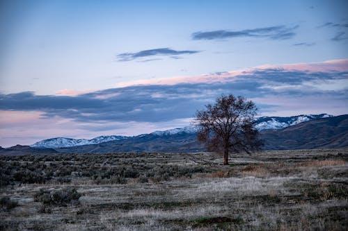 Kostenloses Stock Foto zu baum, berg, landschaft, landschaftlich