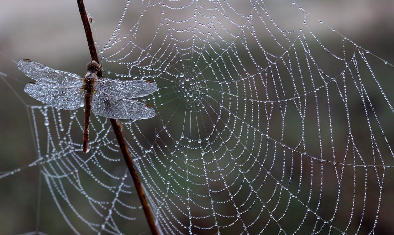macro, web, αράχνη