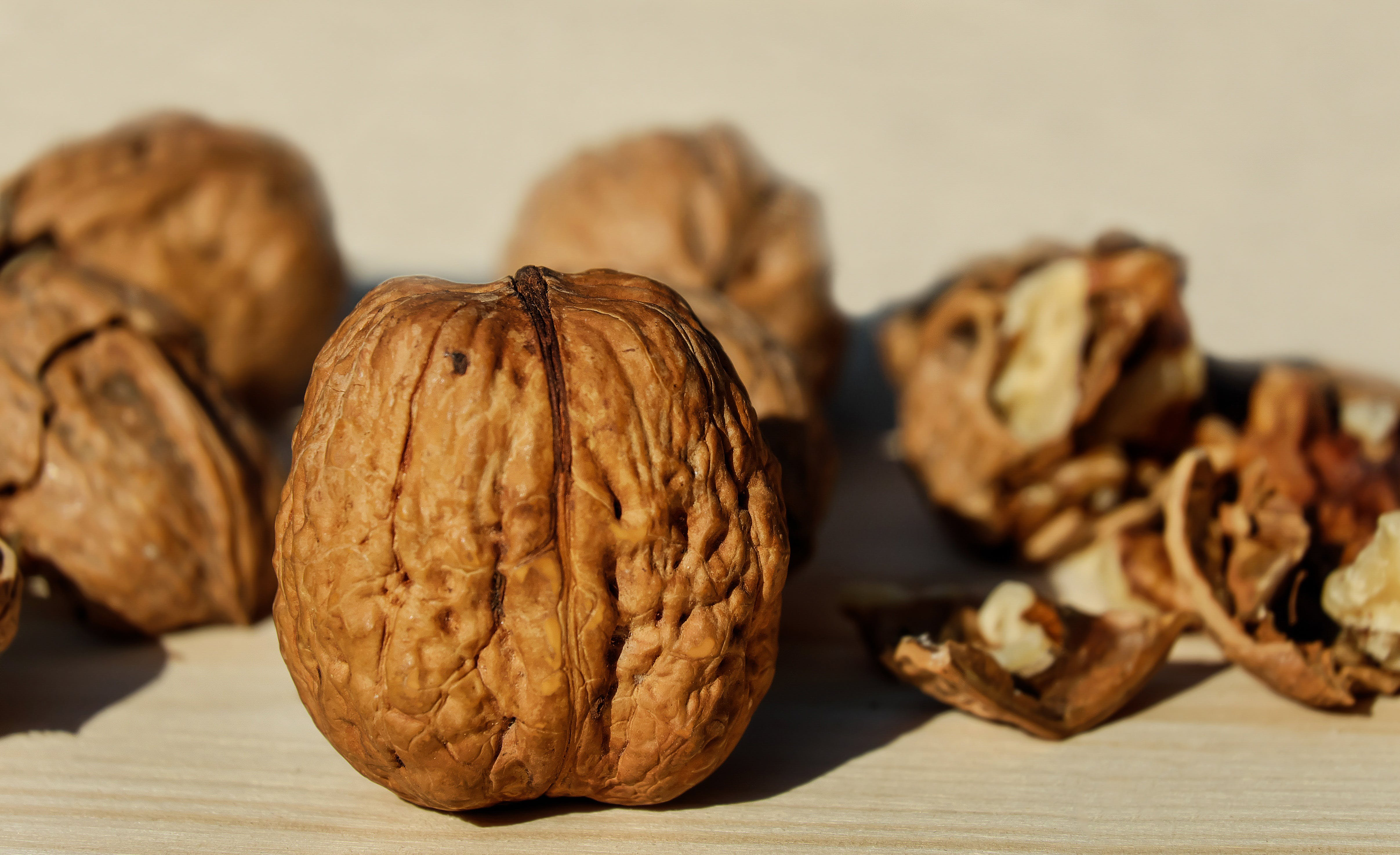 Free stock photo of healthy, autumn, brown, snack