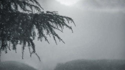 Photos gratuites de arbre, fond d'écran, froid, hiver