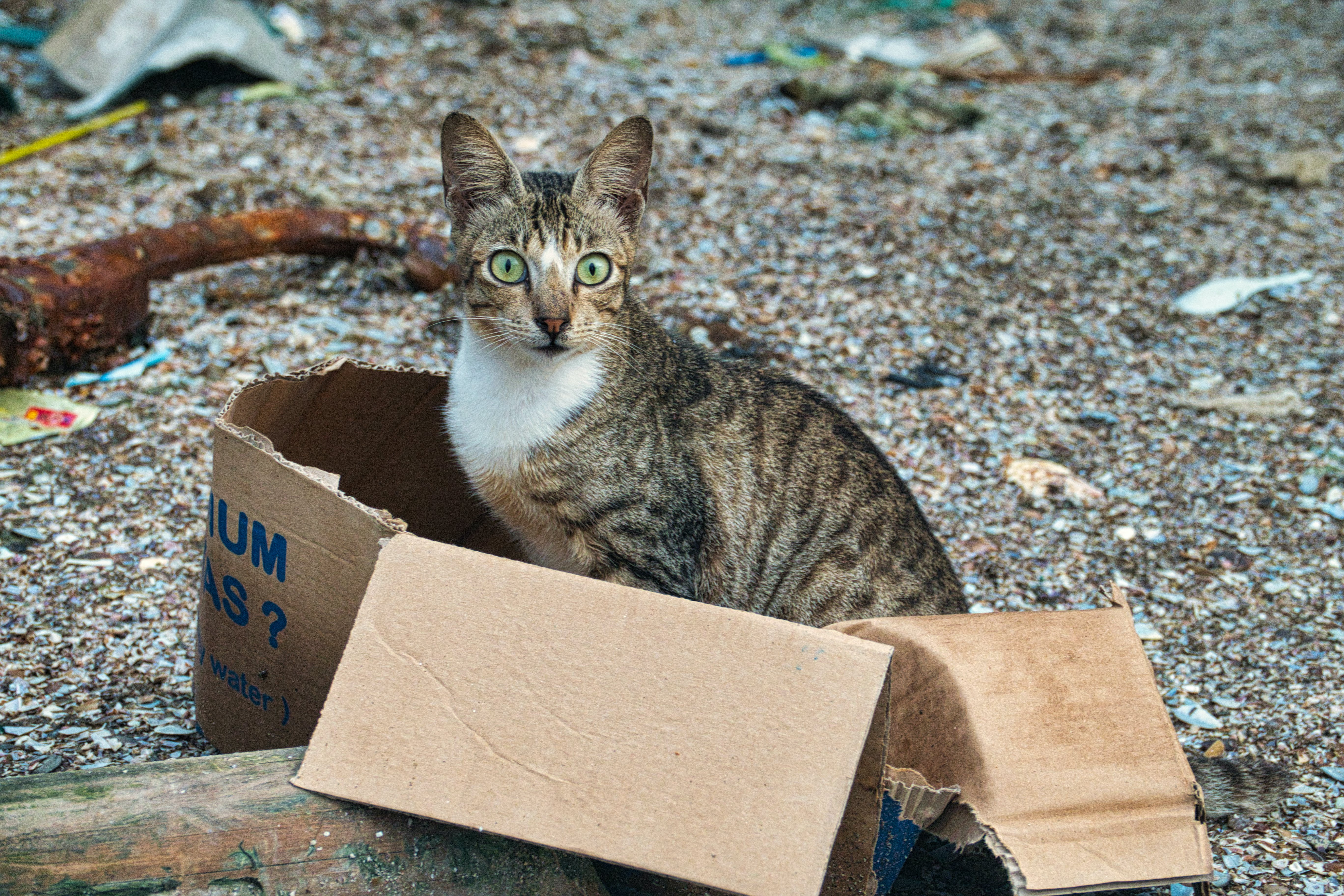 Free stock photo of cardboard, cat, container, cute