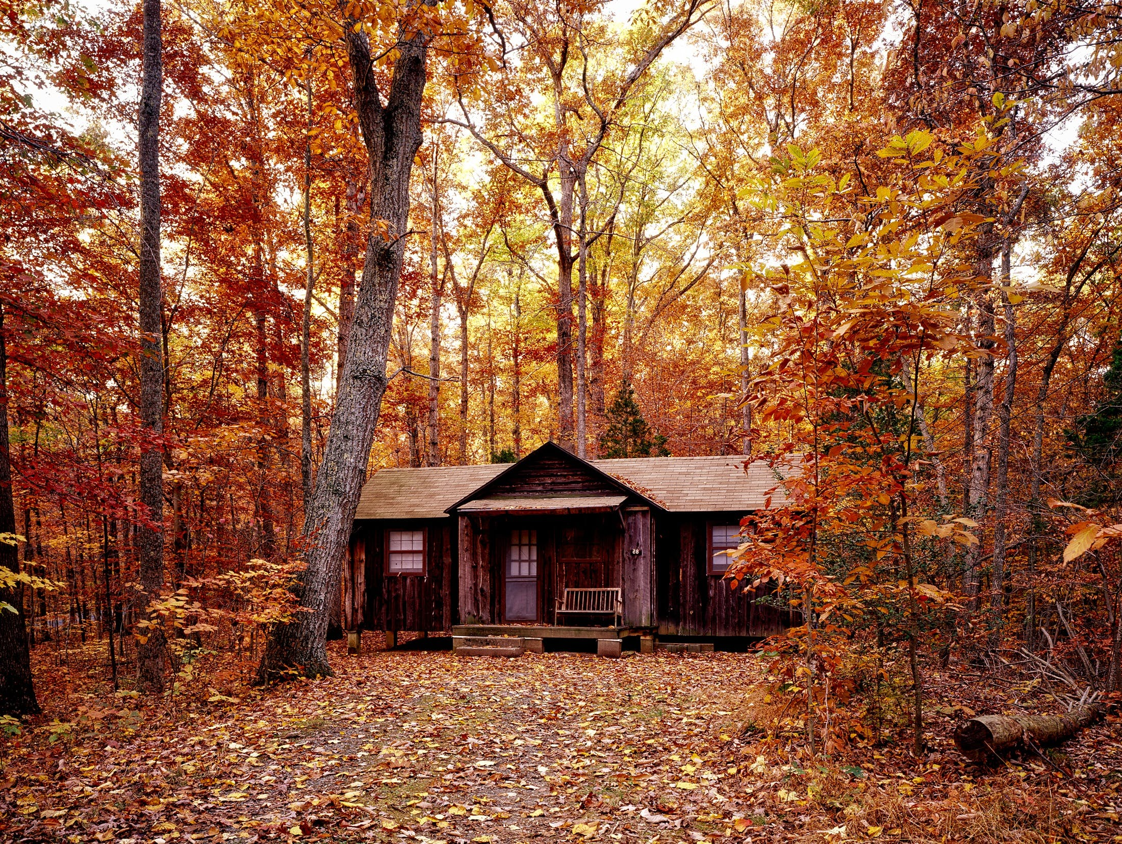 Brown Wooden House on Orange Leaf Trees