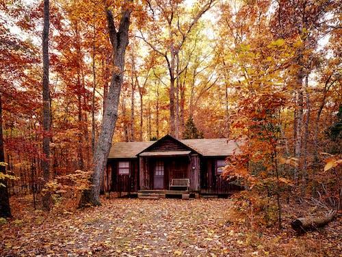 Foto d'estoc gratuïta de a pagès, arbres, auró, bonic