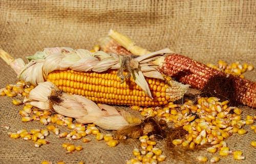 Безкоштовне стокове фото на тему «великий план, вирощувати, жовтий, їжа»