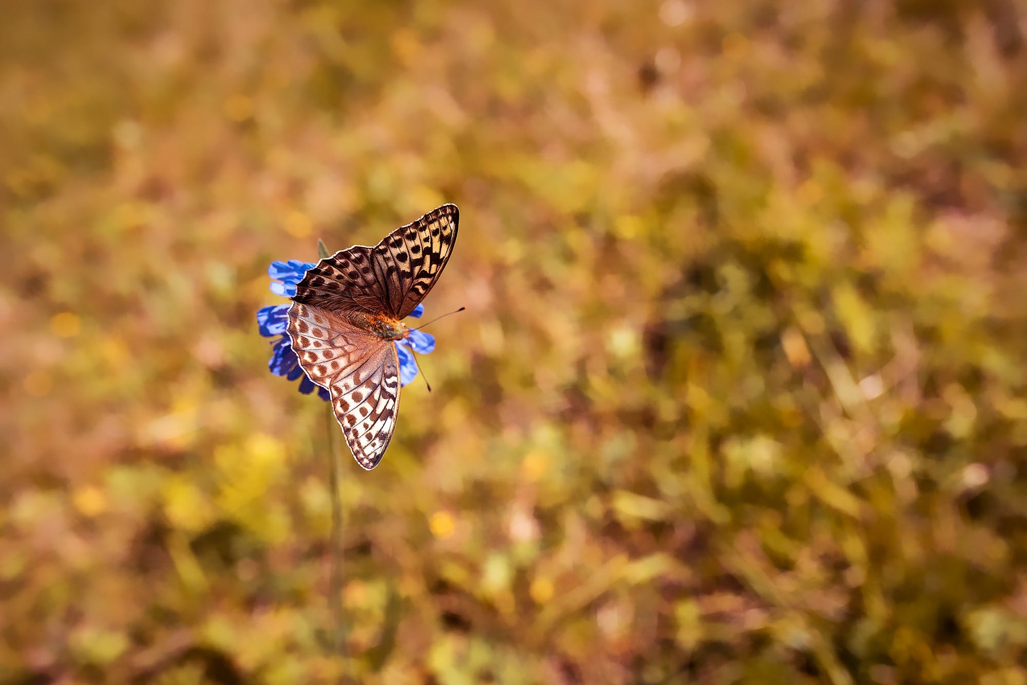 Free stock photo of animal, butterflies, butterfly, close