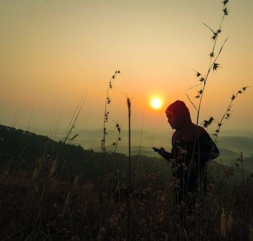 Foto d'estoc gratuïta de alba, arbusts, bonic, cel