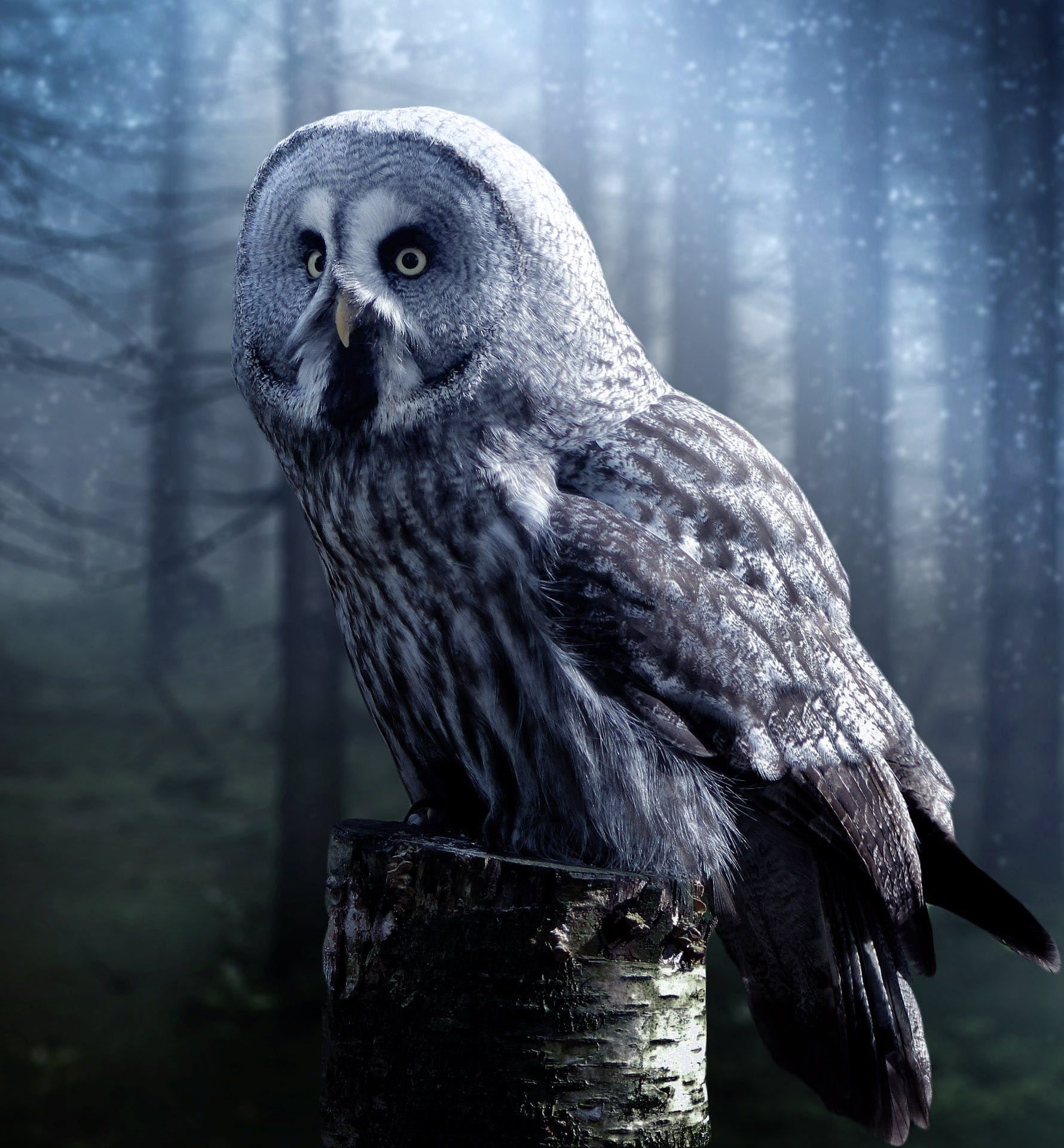 Gray Owl on Brown Tree Trunk