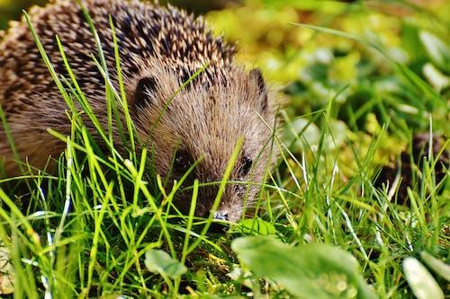 Shallow Focus Photograph of Hedgehog