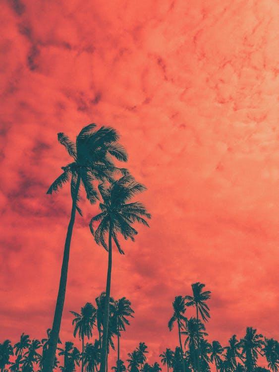 アート, エキゾチック, ココナッツの木