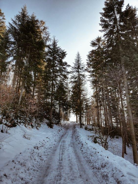 冬季, 冬季景觀, 冰
