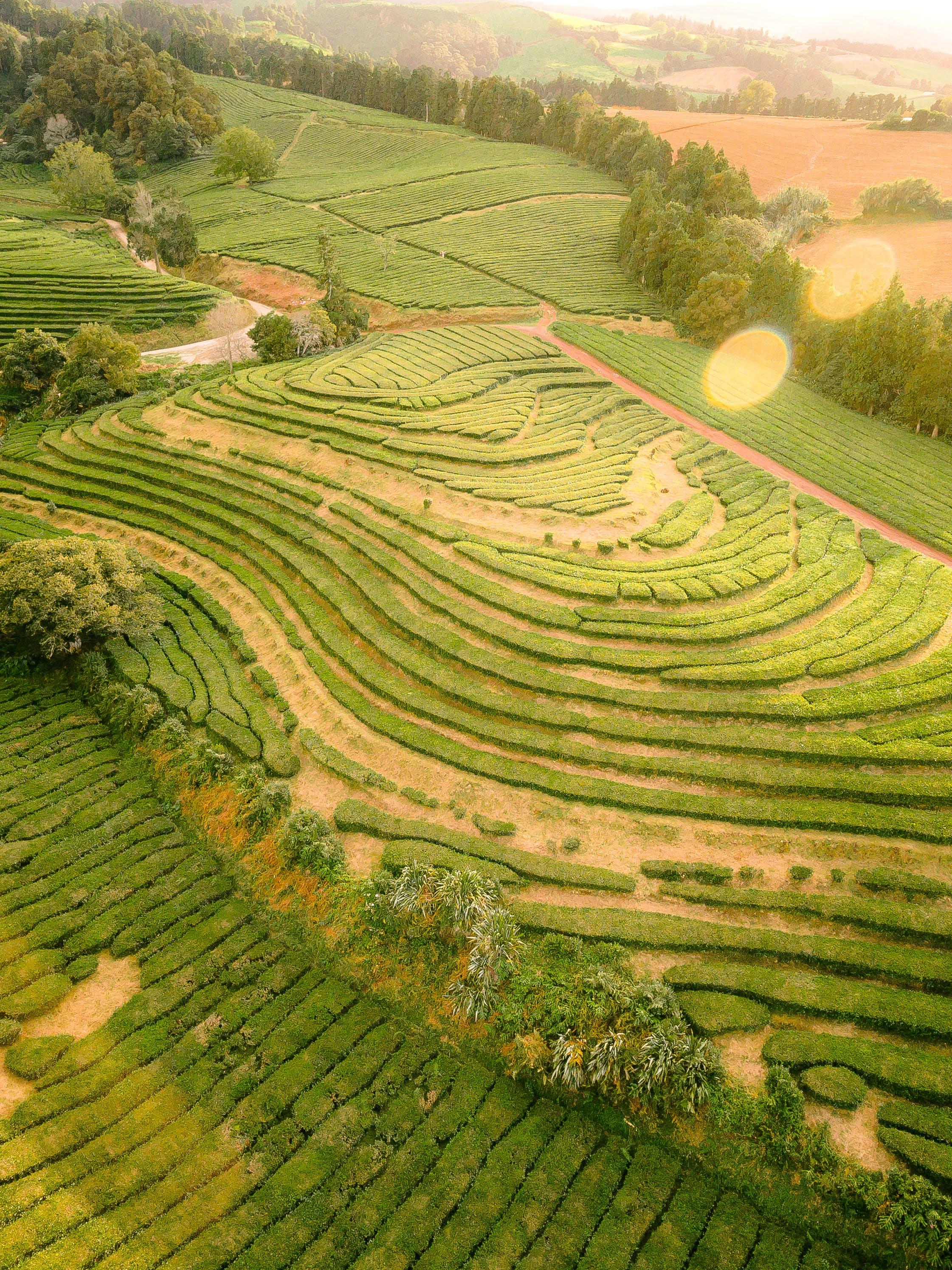 Fotos de stock gratuitas de Azores, plantación de té de chá gorreana - são miguel, vista de drone
