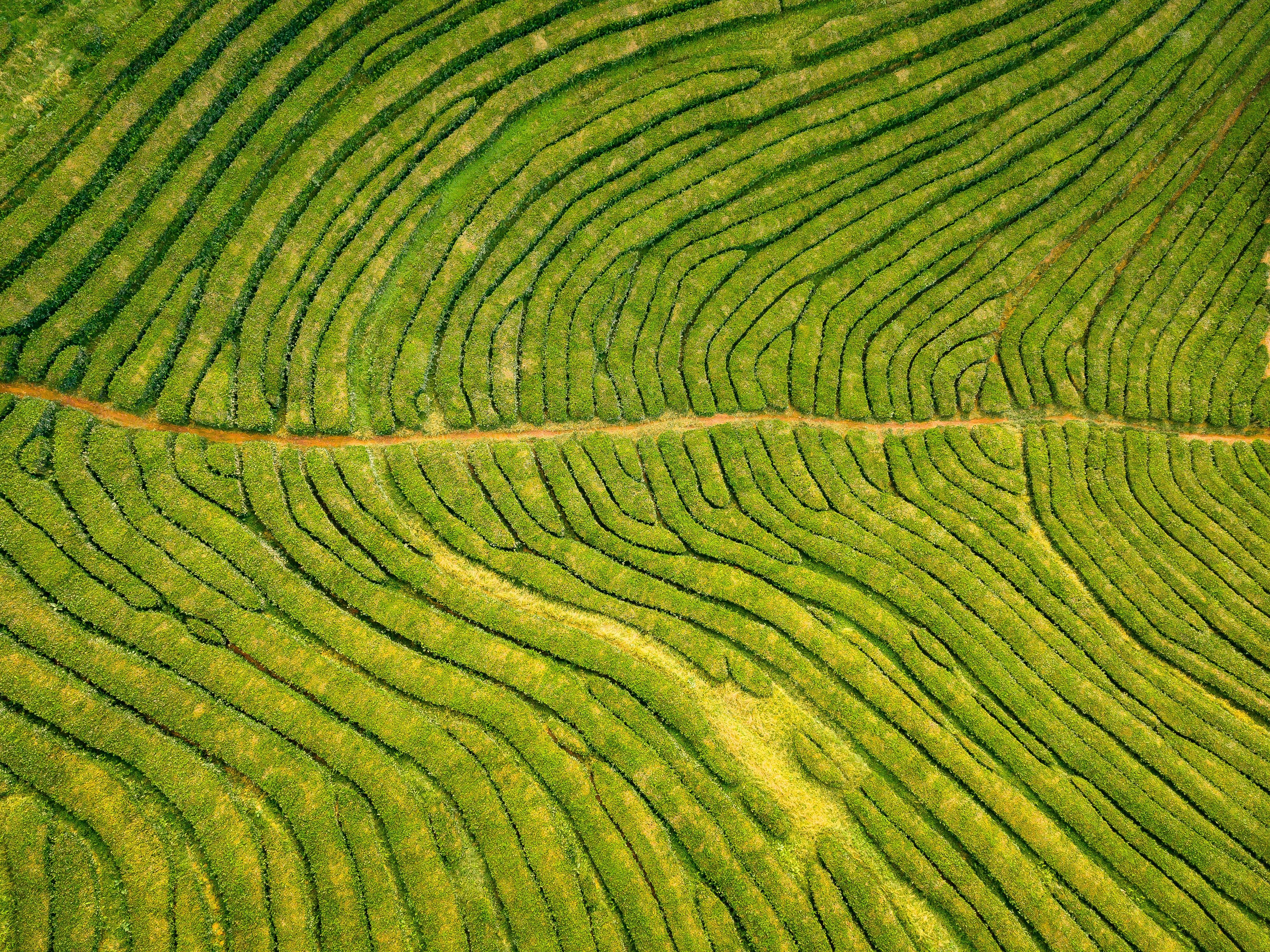 Foto d'estoc gratuïta de Açores, camps de cultiu, creixement, des de dalt