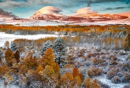 Foto d'estoc gratuïta de arbres, muntanya, natura, naturalesa