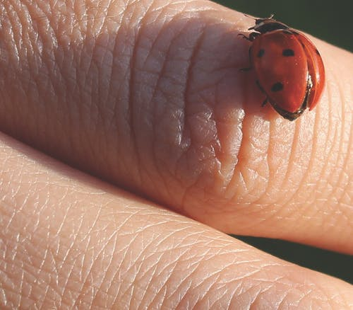 Free stock photo of animal photography, bug, finger, hands