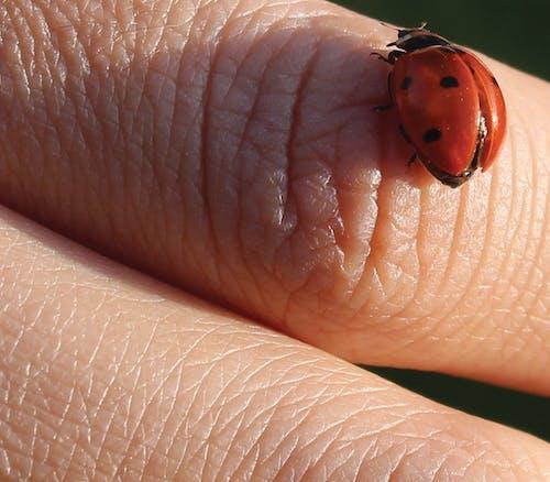 Ingyenes stockfotó állatfotók, bogár, bőr, kezek témában