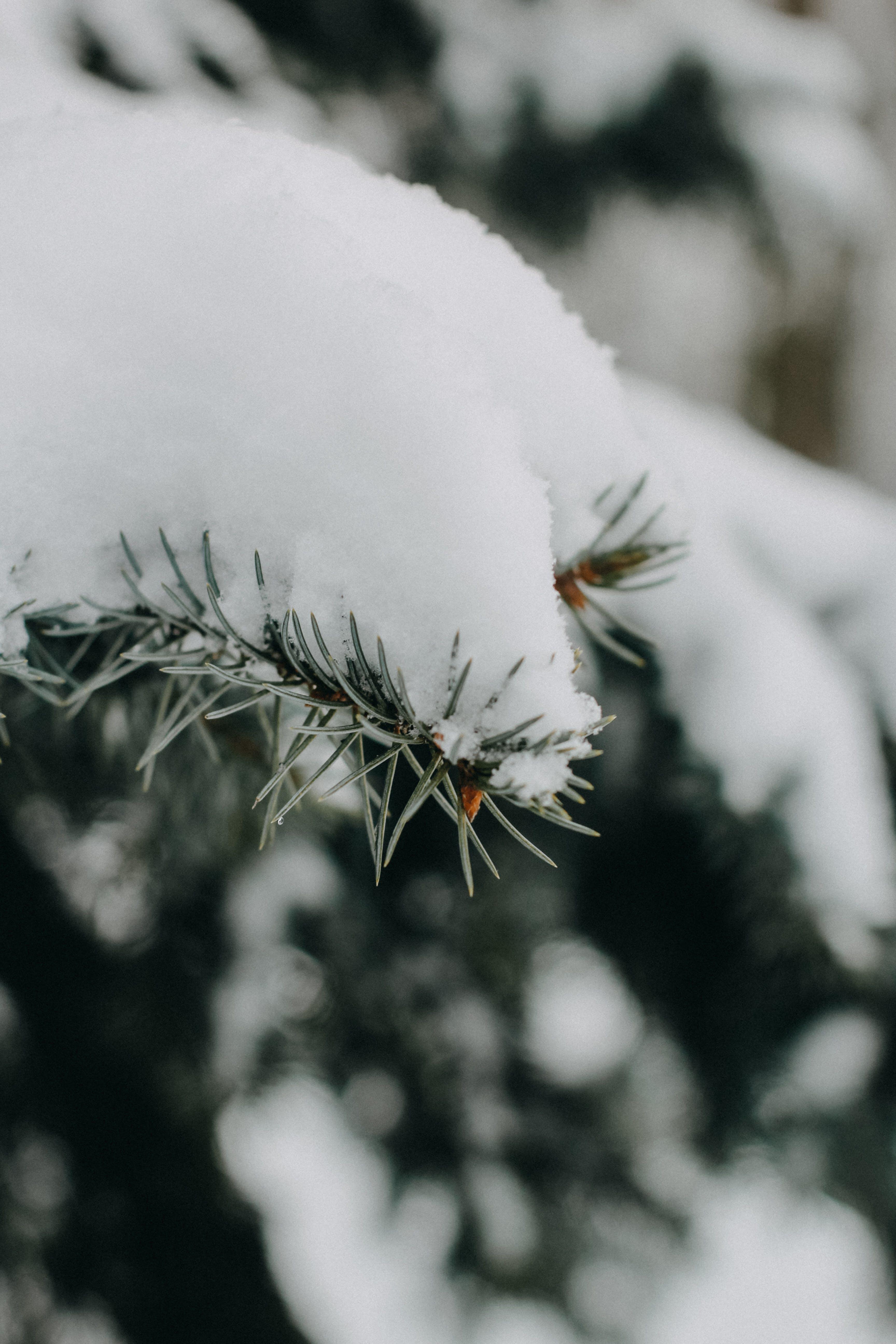 ぼかし, クリスマス, コールド, シーズンの無料の写真素材