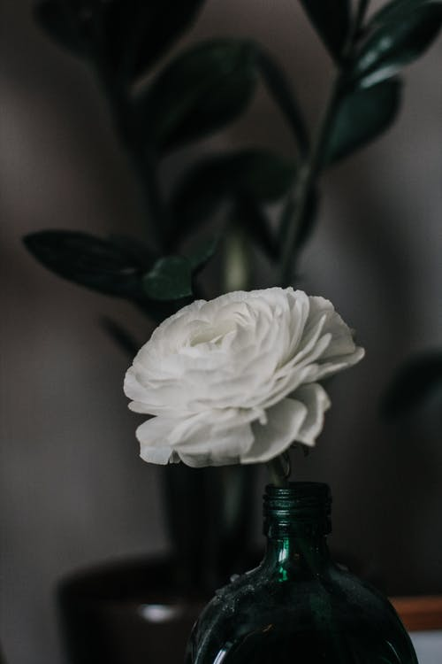 White Petaled Flower in Bottle