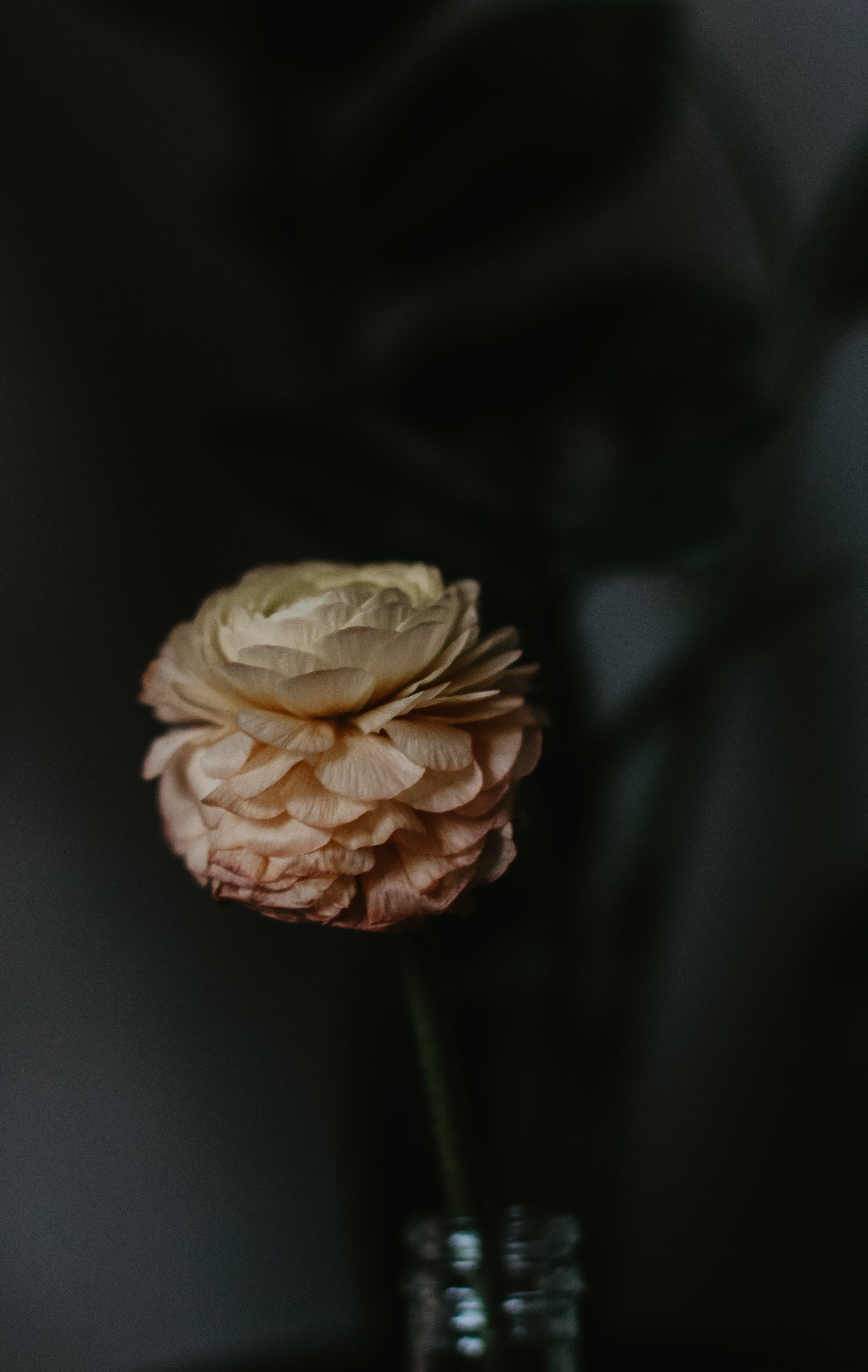 Peach Flower in Vase