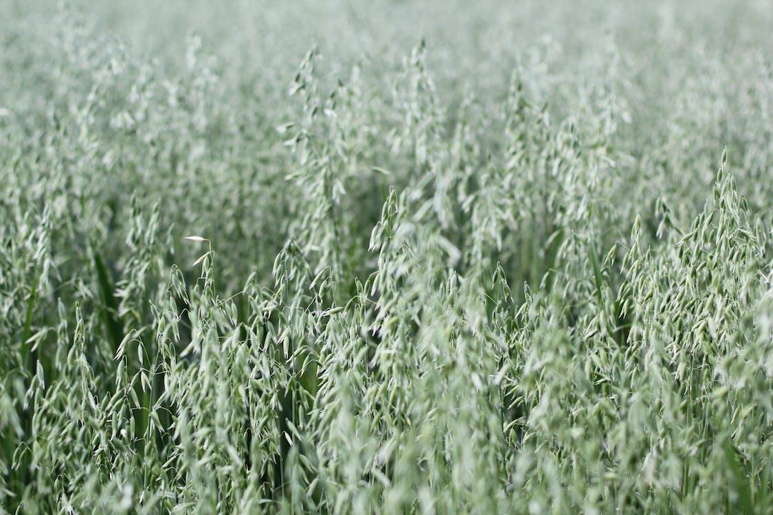 Green Tall Grasses