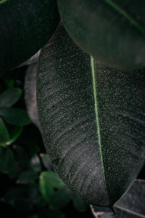 가벼운, 녹색, 색깔, 성장의 무료 스톡 사진