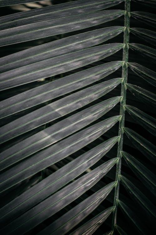 テクスチャ, 成長, 新鮮な, 木の無料の写真素材