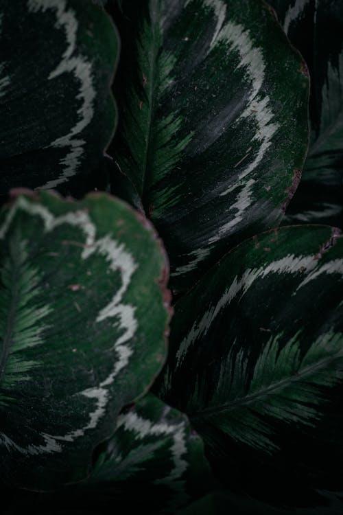 녹색, 색깔, 색상
