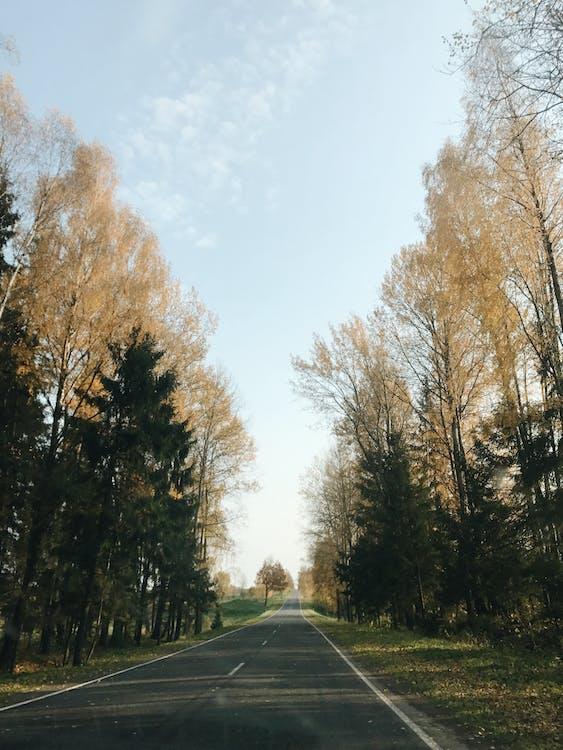 asfalt, asfalterad väg, körfält