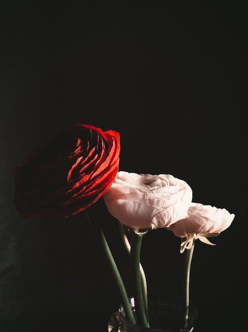 Foto stok gratis bagus, bunga-bunga, flora, halus