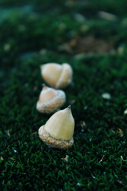 Three White Walnuts