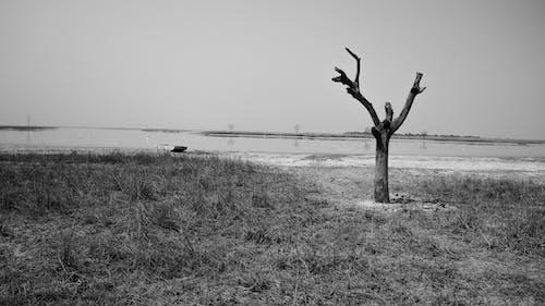 Základová fotografie zdarma na téma černobílá, příroda
