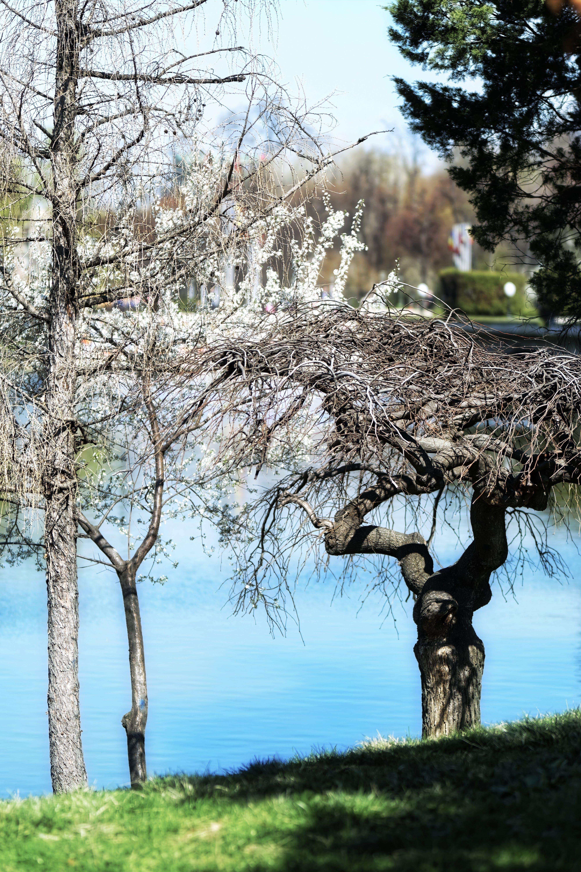 Free stock photo of blossom, conifers, landscape, nature