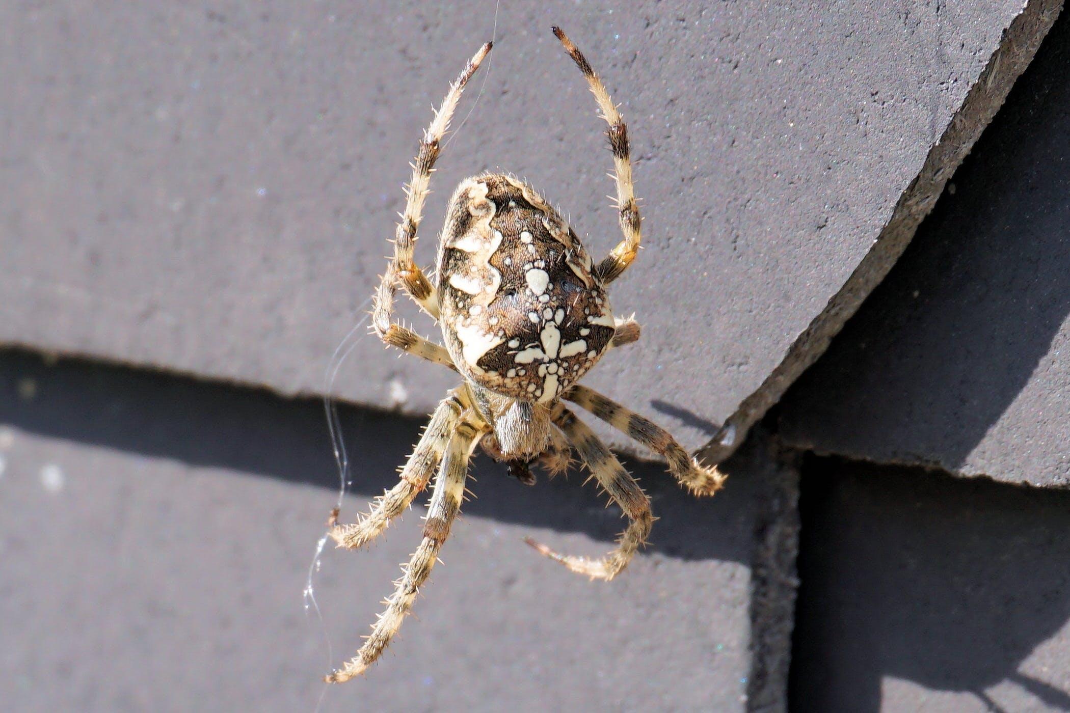 Free stock photo of nature, animal, insect, cobweb