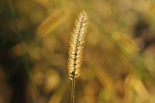 乾草, 增長, 夏天, 太陽 的 免費圖庫相片