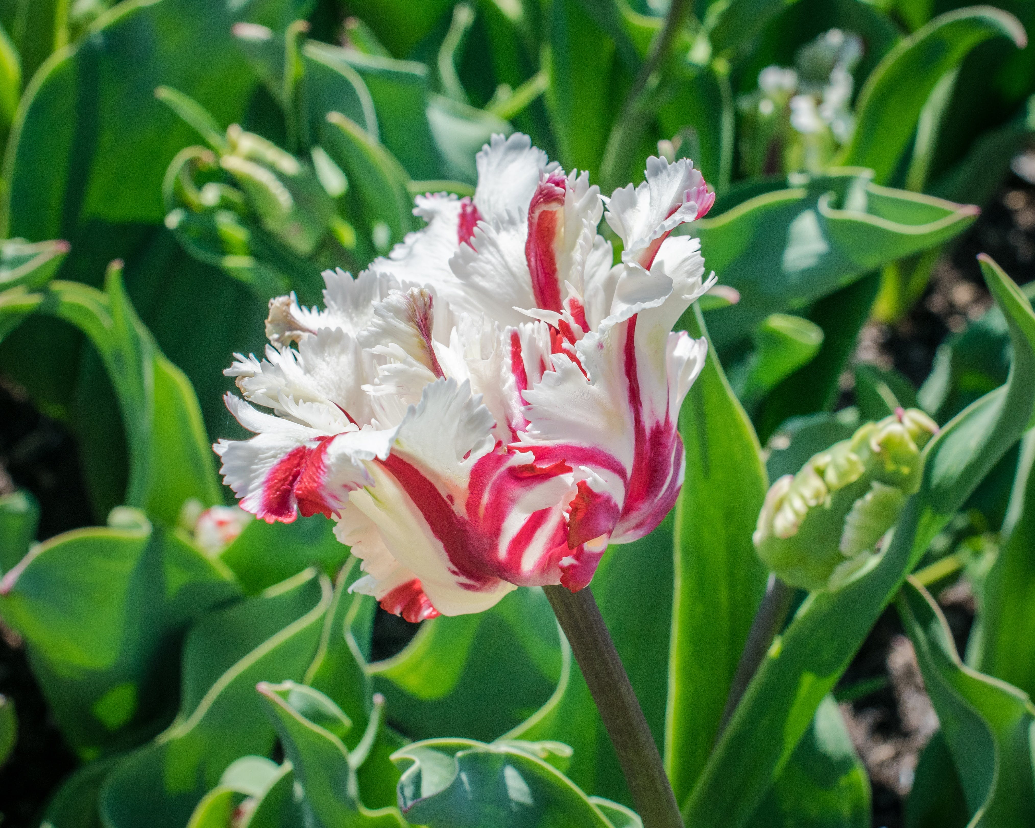 White and Red Flower during Day Time