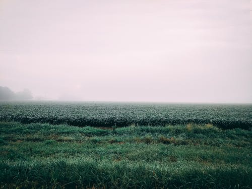 Free stock photo of farming, field, fog, green