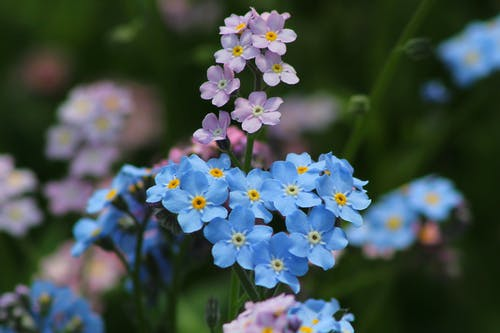 Blue Andpurple Flowers