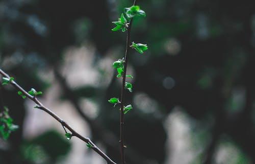 bitkibilim, bulanık arka plan, büyüme, çevre içeren Ücretsiz stok fotoğraf