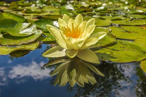 Ilmainen kuvapankkikuva tunnisteilla hauras, heijastus, kasvi, kasvikunta