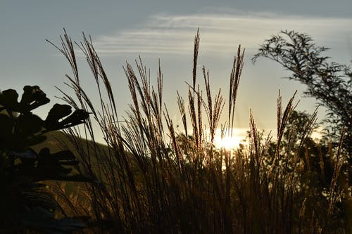 Ilmainen kuvapankkikuva tunnisteilla aamu, auringon häikäisy, auringonlasku, auringonnousu